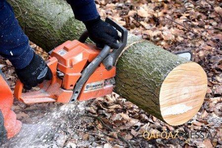 Ağacların kəsilməsi ilə bağlı şikayət araşdırıldı